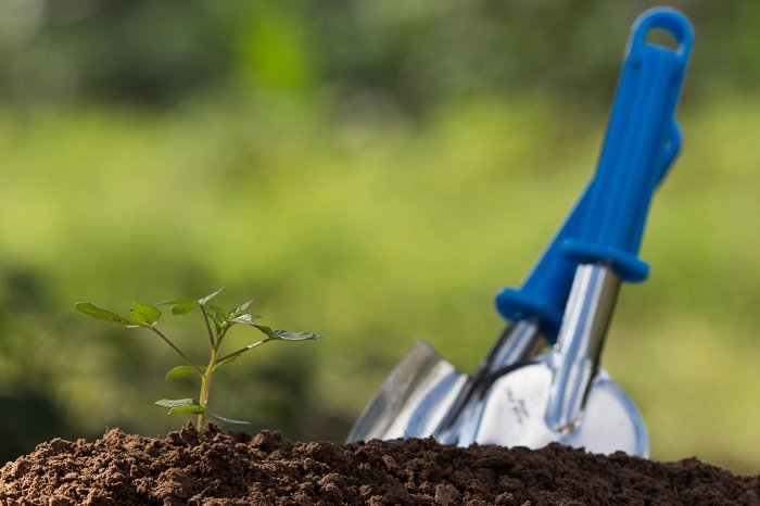 ¿Qué es un suelo bien drenado y cómo prepararlo?