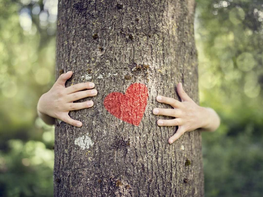 ¿Cómo saber la edad de un árbol?