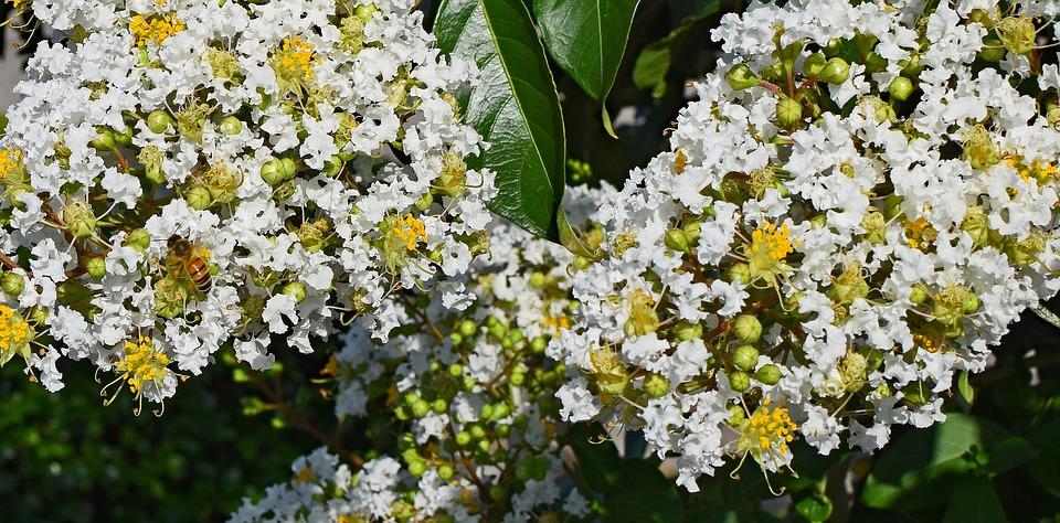 10 arbustos con flores