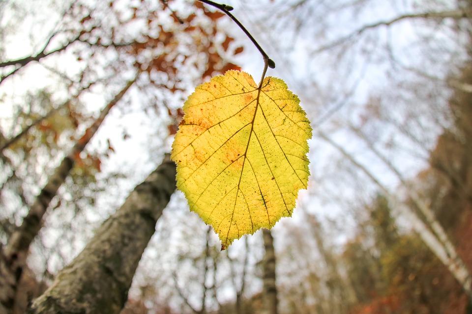 Plantas con hojas amarillas – Causas y qué hacer