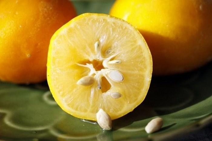 ¿Cómo plantar semillas de limón?