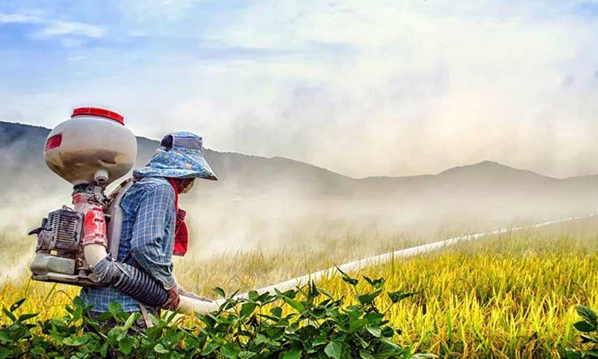 Producto fitosanitario – Tipos, etiqueta y utilidad