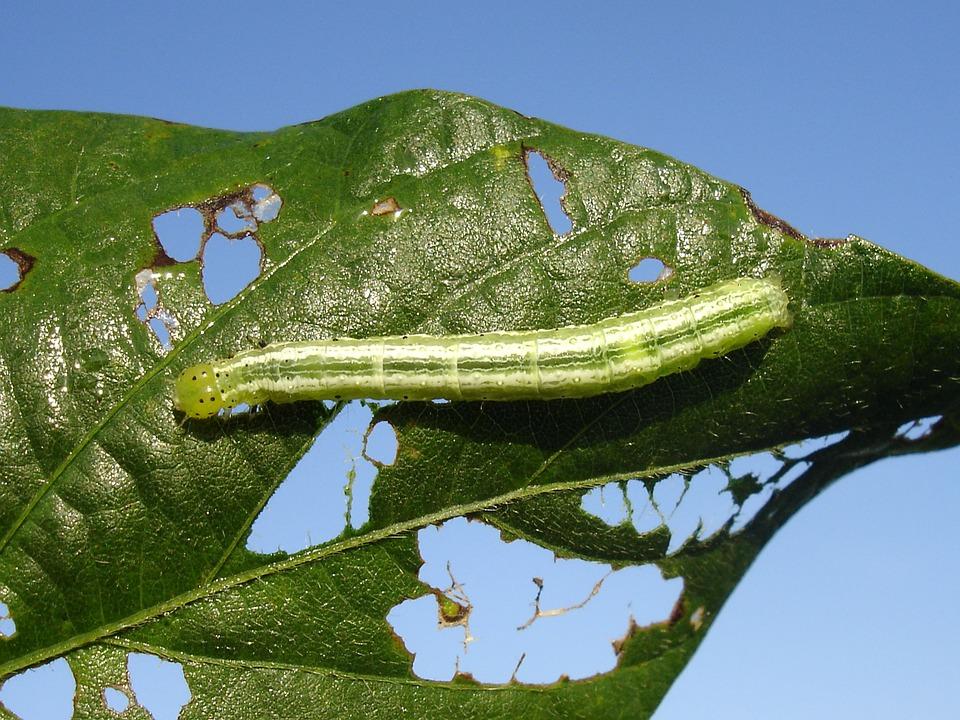 ¿Cómo eliminar gusanos de las plantas?