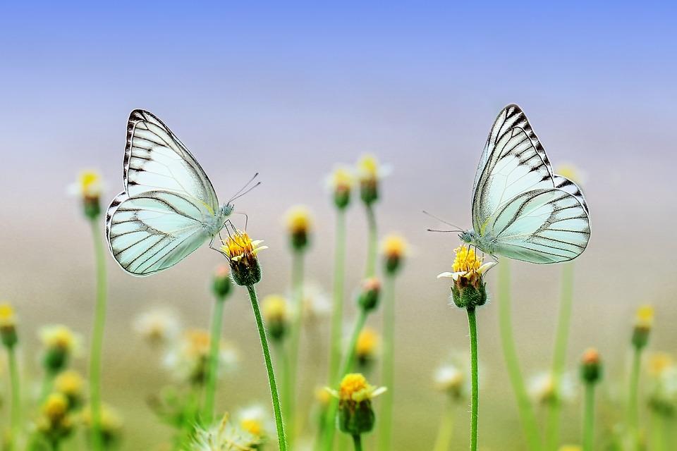 10 insectos beneficiosos para el huerto