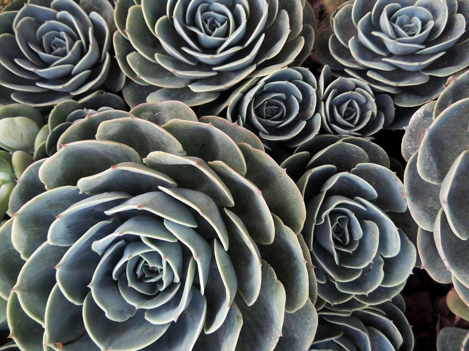 10 plantas resistentes al sol