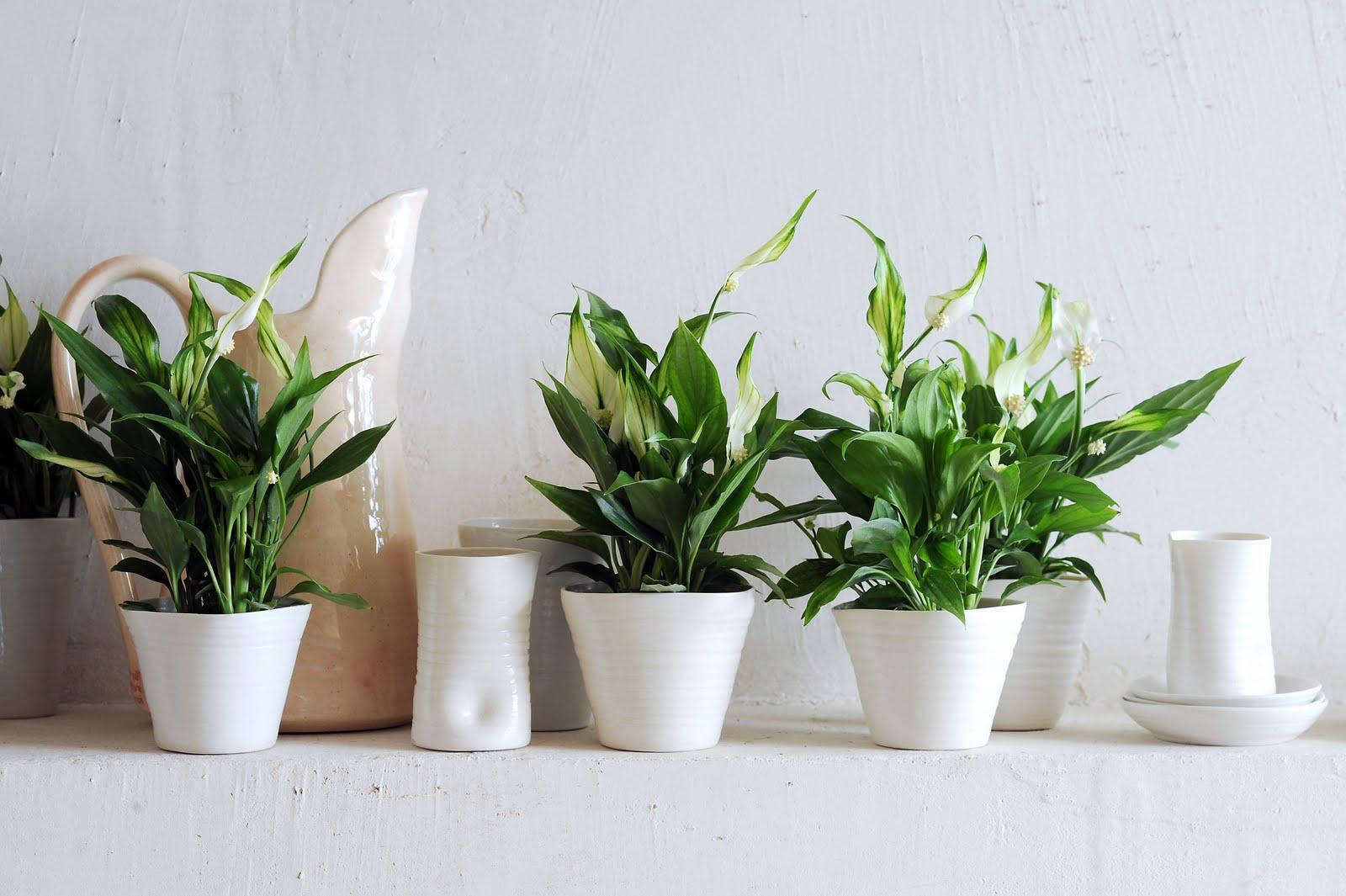 5 plantas que purifican el aire (según la NASA)
