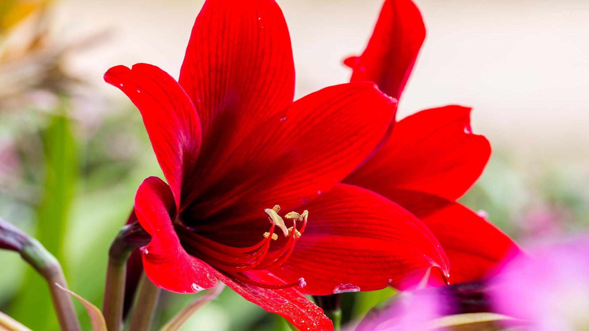 10 plantas de interior con flor