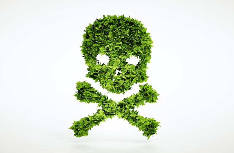 5 plantas venenosas comunes en casa