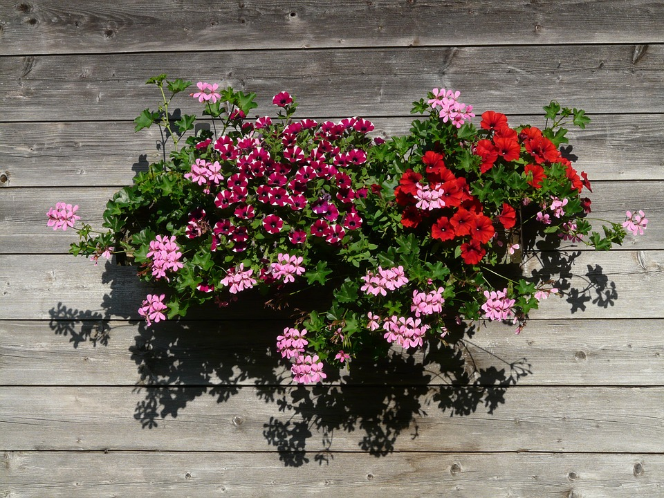 petunia-plantas-para-terrazas