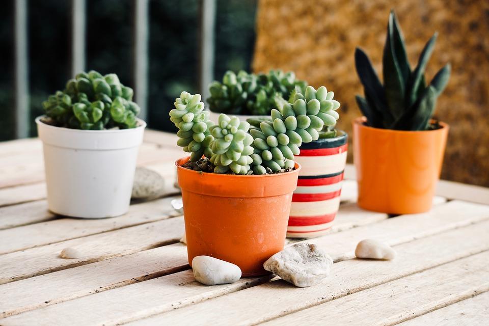 suculentas-plantas-para-terrazas