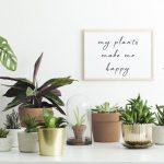 10 plantas de interior fáciles de cuidar