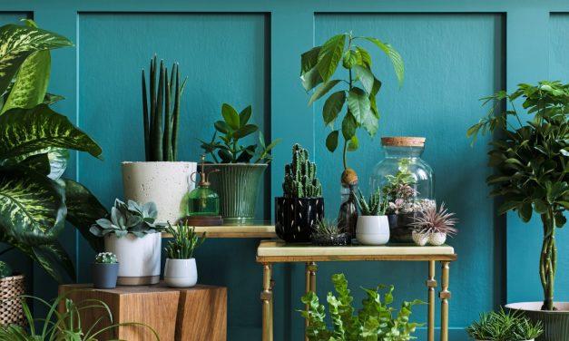 10 consejos para cuidar plantas de interior