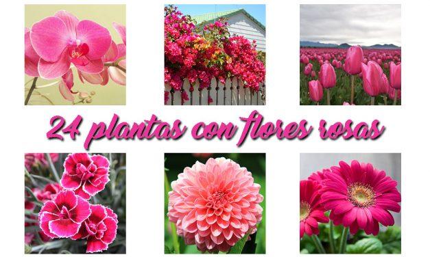 24 plantas con flores rosas