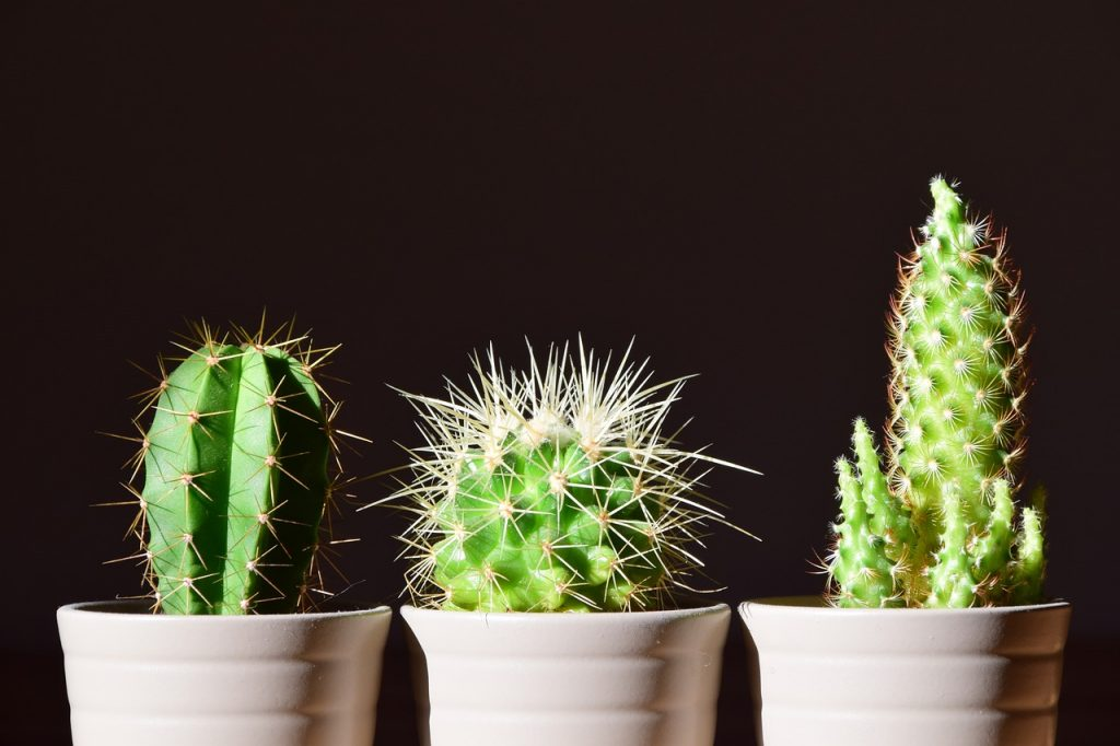 cactus-plantas-para-terrazas