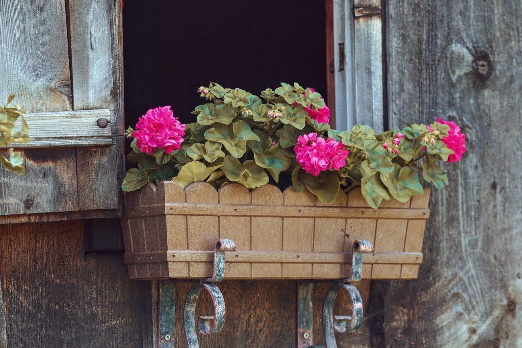 geranio-plantas-para-terrazas