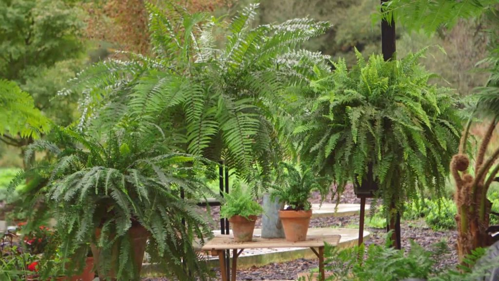 helecho-plantas-para-terrazas