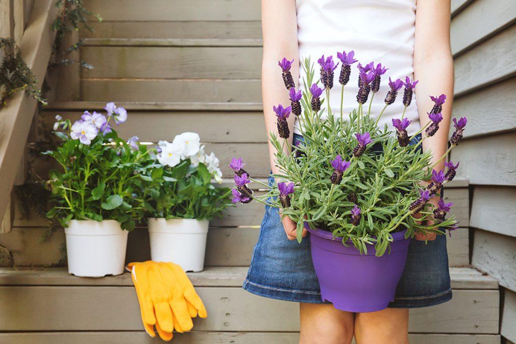 lavanda-plantas-para-terrazas