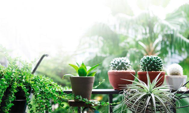 20 plantas  para terrazas