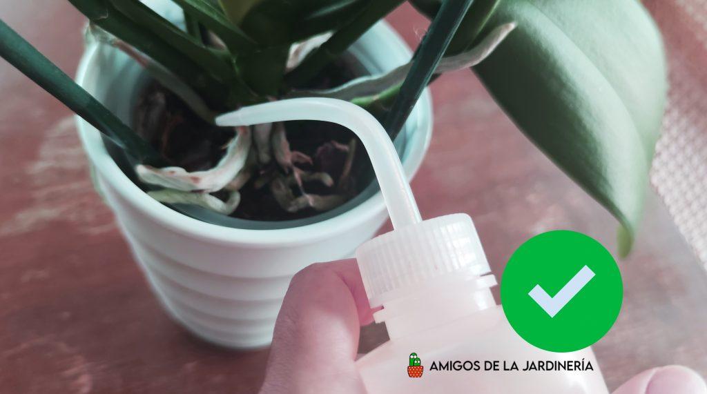 regar-orquideas-phalaenopsis